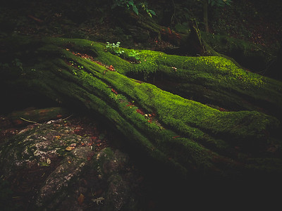 Mitake Moss