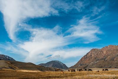 Horses roaming wild