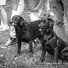 At The Dog Trials