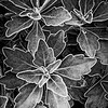 NaturesPatterns_BW