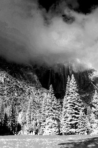 Trees covered in snow during winter in Yosemite National Park, California - © Simpson Brothers Photography