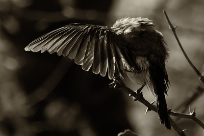 """Wing"""