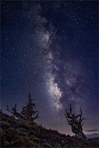 Milky Way and Meteor, Bristlecone Pine Forest, White Mountains, California