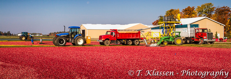 Cranberry Harvest at the Vilas Cranberry bogs near Manitowish Water, Wisconsin, USA.
