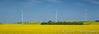 A yellow blooming canola field and the electric windfarm near St. Leon, Manitoba, Canada.
