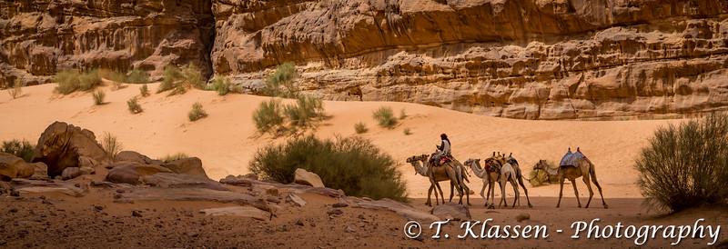 Camels in the Wadi Rum desert, Hashemite Kingdom of Jordan, Middle East.