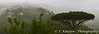 Mist and cloud on the hillside at Santa Agata, Campania, Italy.