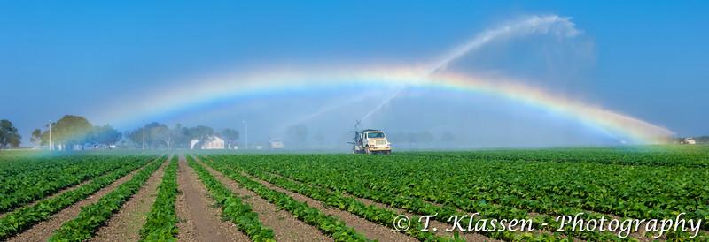 Field irrigation rainbow near Homestead, Florida, USA.