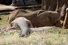 Trip to the Dallas Zoo  2-15-2016