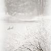 Snowbirds 2