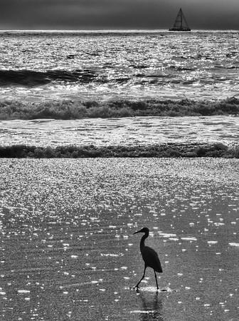 A Nice Day For A Stroll On The Beach
