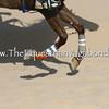 Desert Sprint II