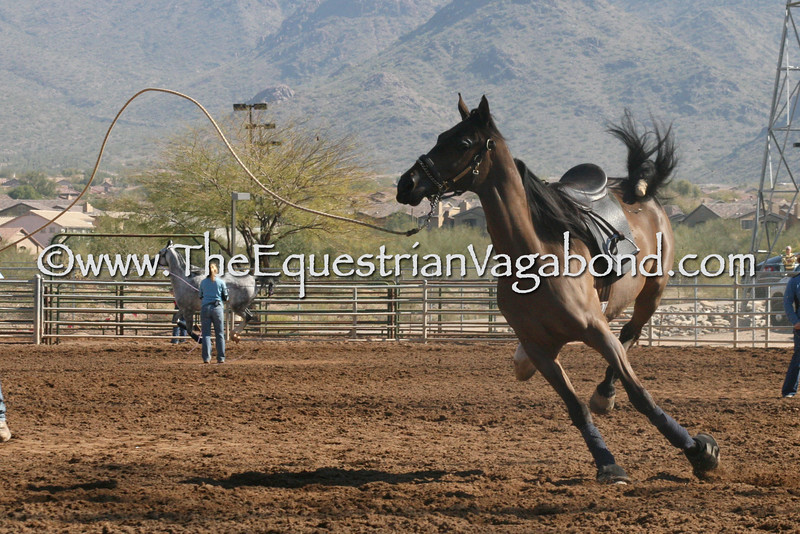 Creative Lunging IV