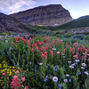 Mt. Timpanogos Wildflowers At Sunset