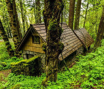 Forest Dwelling - Oregon Rainforest