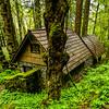 Forest Dwelling - Oregon Rainforest