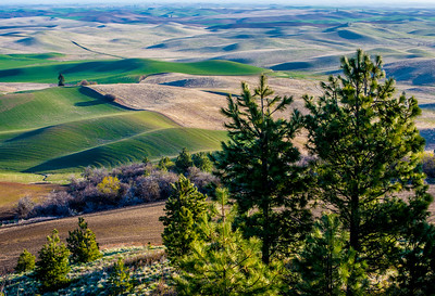 Palouse Country - Eastern Washington