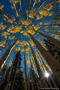 Sun bursting through the aspen