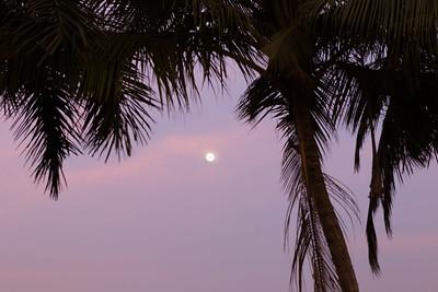 Palm & Moon