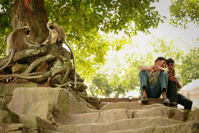 social creatures<br /> Bhubaneshwar, India