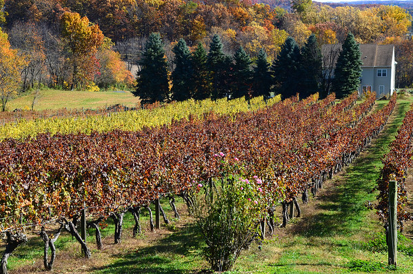 Fall at the Fiore Winery