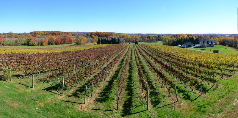 Fiore Vineyards