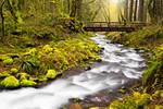 ~A River Runs Through It~