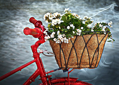 flowers on bike_2-_pe