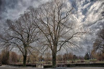 trees scene DSC_1362_HDR