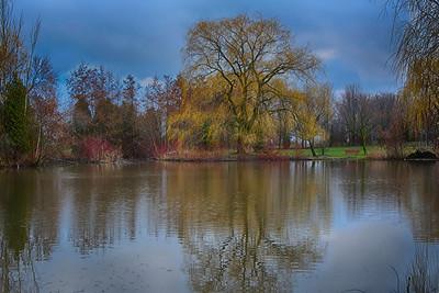 trees refl_DSC_1380_HDR