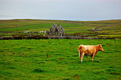 Abandoned church in western Ireland.  I had to run down the street to get this cow in the foreground.