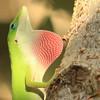 Lizard0008