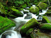 Roaring Fork Area, Smoky Mountains N.P.