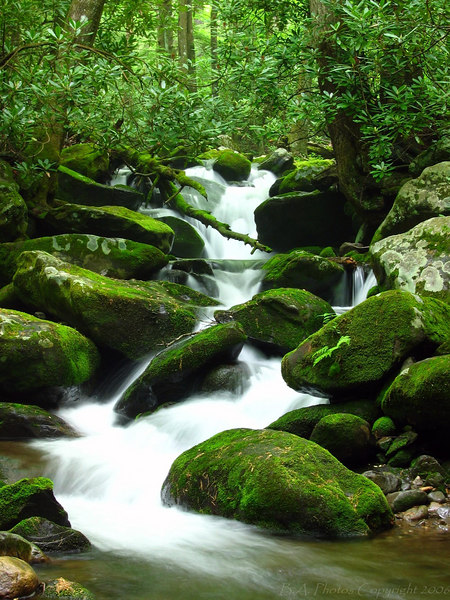 Roaring Fork Motor Trail, Smoky Mountains National Park.