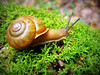 Snail Macro, Smoky Mountains N.P.