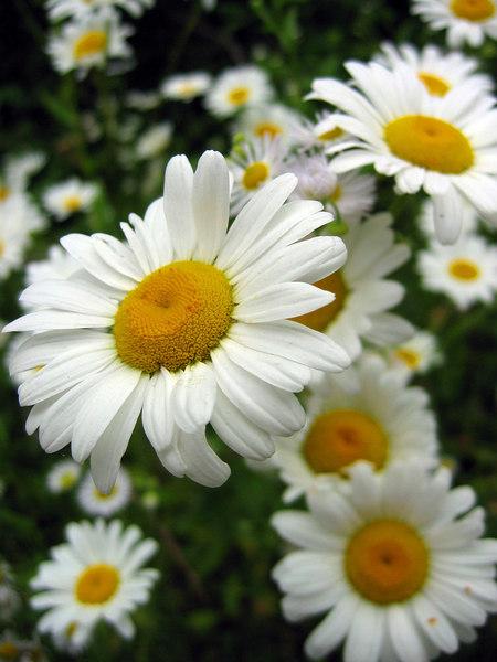 Flower Macro, Cherokee National Forest