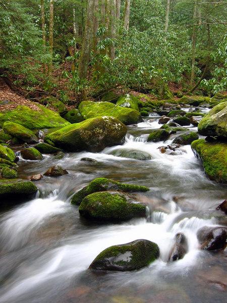Smoky Mountains N.P.