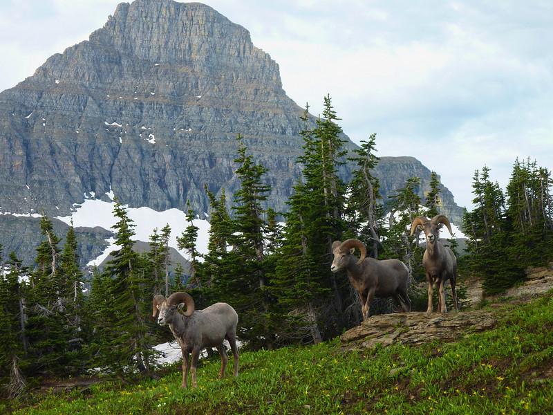 Logan Pass Area, Glacier N.P.