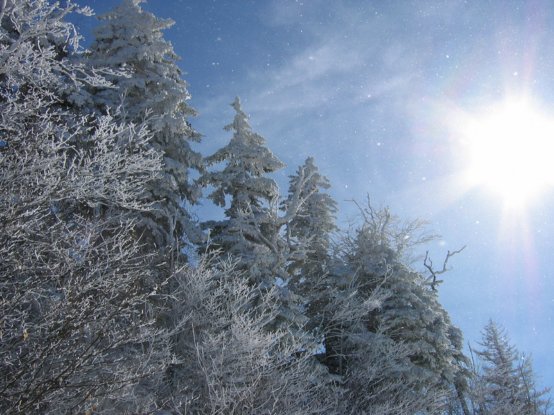 Snowstorm near Clingmans Dome. (GSMNP)