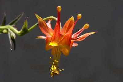 June 15: Flower in a friend's yard.