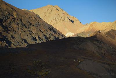 Dall Sheep, Polychrome Mountain, Denali National Park.