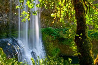 Breathtaking Winter Falls at Silver Falls State Park ~ Trail of Ten Falls, Oregon.