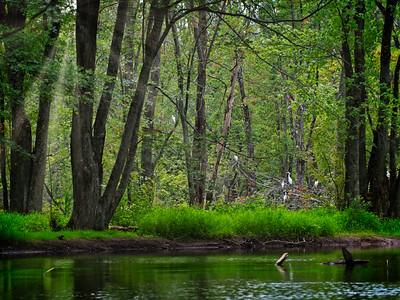 Egrets Hangout - Collingwood, Canada