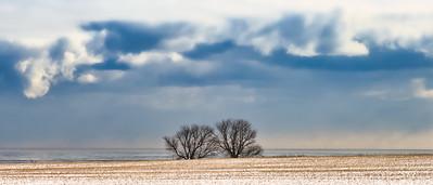 'Companions' - near Newcastle, Ontario CANADA