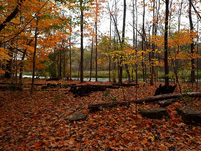 Fall Splendour - Credit River trails, Mississauga, Ontario, Canada
