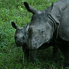 BABY RHINO WITH MOTHER. CHITWAN. ROYAL CHITWAN NATIONAL PARK. NEPAL.