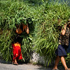 CARRY THE GRASS. HIGHWAY FROM KATHMANDU TO GORKHA. NEPAL.