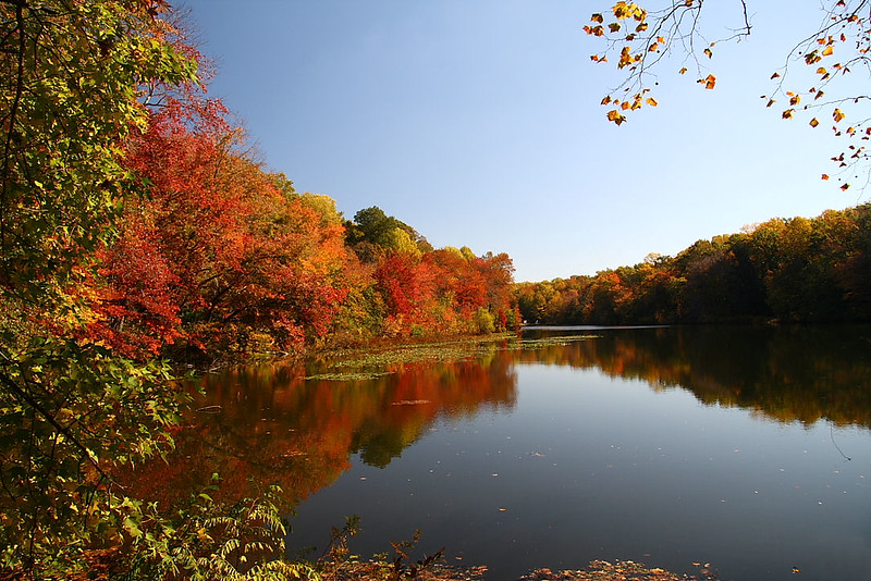 IMG#3160<br /> Alloway Lake, New Jersey Fall 2008