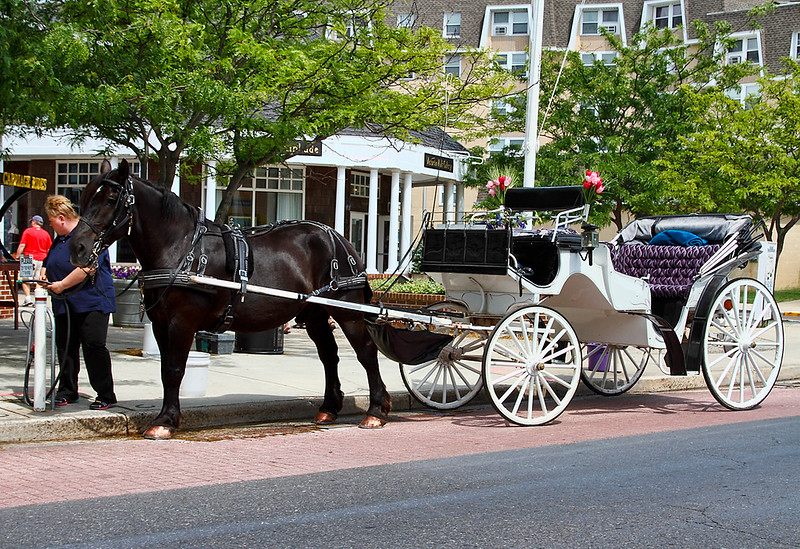 Horse and Carriage...Cape May, New Jersey