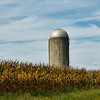 <center>IMG#4799  September Cornfield...Deerfield, NJ 2012 <center>
